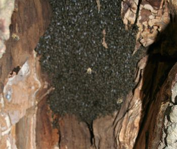 ŠEPETALEC ČEBELAM ob Svetovnem dnevu čebel