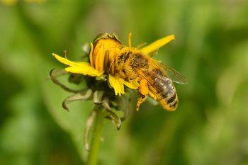 Zaključen je foto natečaj Čebelarstvo na kobariškem