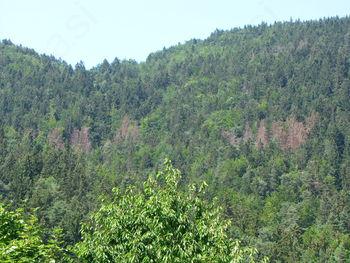 Rdeči alarm v gozdovih zaradi podlubnikov