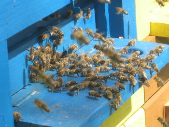 Dan čebel