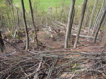 Pomoč pri sanaciji žledoloma v gozdovih
