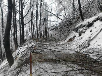 Ledena ujma poškodovala gozdove tudi na Kobariškem