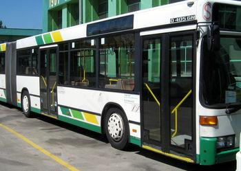 Brezplačno z avtobusi LPP na sprejem košarkarjev in odbojkaric