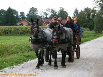 S konjsko vprego po Ljubljanskem Barju