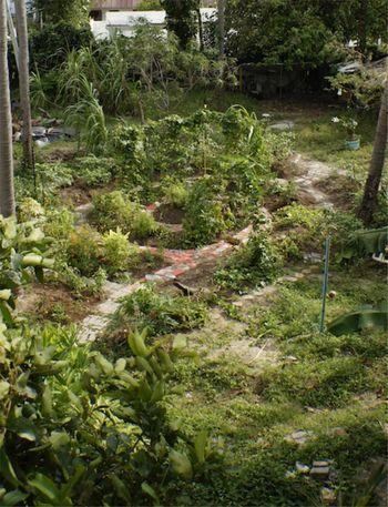 Vrtnarjenje s posnemanjem vzorcev iz narave - delavnica o permakulturi