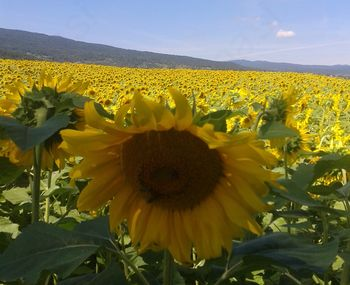 Čebelarsko društvo Straža - Dolenjske Toplice praznuje