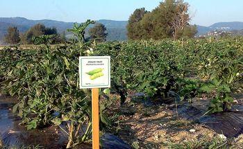 Eksotične in nenavadne zelenjadnice spet na preizkušnji