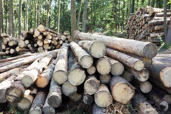 Za skoraj milijon evrov škode v borovniških gozdovih