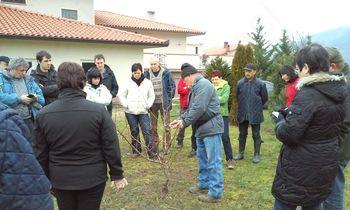 O obrezovanju sadnih dreves