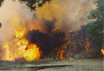 Razglašena je velika požarna ogroženost naravnega okolja