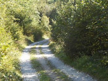 Ureditev ceste na Božco