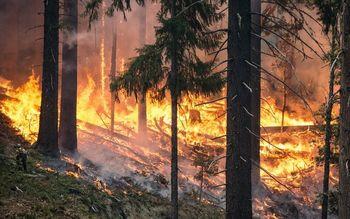 Razglas velike požarne ogroženosti naravnega okolja od 20. marca 2020 na območju celotne države