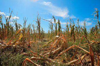 Prijava  škode na kmetijskih pridelkih po suši 2017