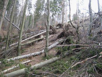 Poziv lastnikom gozdov - prijava škode po vetrolomu