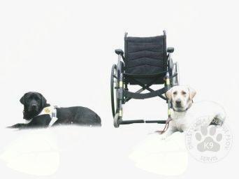 Pes pomočnik za gibalno ovirane osebe