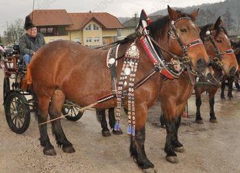 Blagoslov konj na Vrzdencu