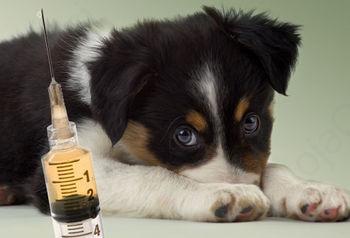 Preventivna cepljenja pri psih