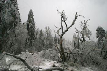 Pred sanacijo gozda obvestite revirnega gozdarja