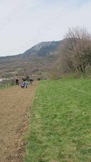 Od semena, sadike do pridelave zelišč na prostem in novih delovnih mest