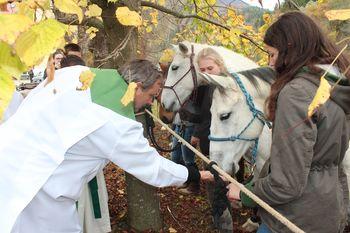 Fotoutrinki: Blagoslov konj na Frankolovem