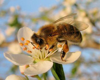 Varujmo čebele.