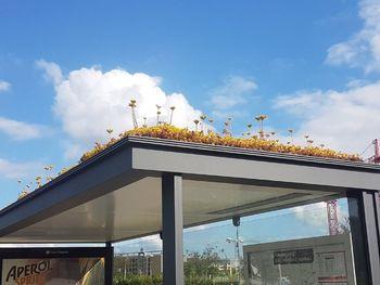 Zelene strehe - zasadimo dragocen košček narave na strehi