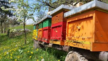 Praznovanje 3. svetovnega dneva čebel