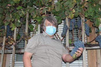 Fotogalerija: Trgatev Vinogradniško vinarskega društva Vojnik
