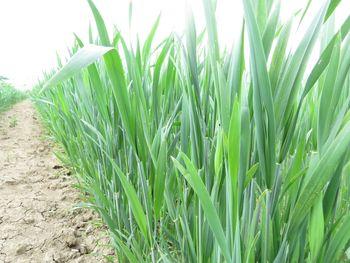 Gnojenje kmetijskih zemljišč z organskimi in mineralnimi gnojili od začetka marca 2021 dalje