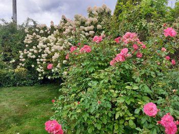 Foto utrinki okrasnega vrta Nade Močenik iz Višnje vasi
