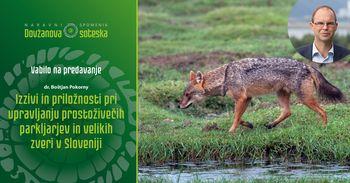 Izzivi in priložnosti pri upravljanju prostoživečih parkljarjev  in velikih zveri v Sloveniji - vabilo na predavanje
