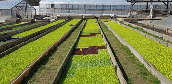 V občini Tržič povečano povpraševanje po lokalnih kmetijskih pridelkih