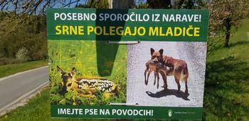 Živali v tržiških gozdovih potrebujejo mir – držimo se urejenih in označenih poti