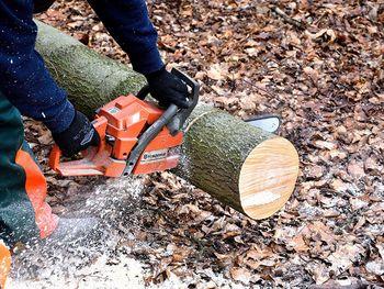Tečaji varnega dela za lastnike gozdov