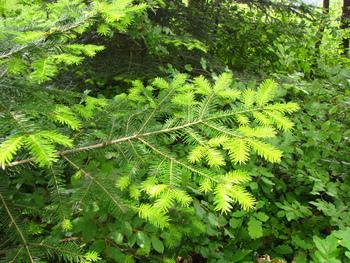 21. marec - Mednarodni dan gozdov