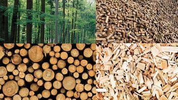 Pomemben trajnostni energent naše države je les