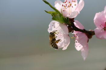 Pozivi k pravilni uporabi fitofarmacevtskih sredstev in varstvu čebel.