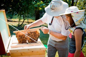 Zakaj ne bi Slovenije identificirali s čebelnjakom?
