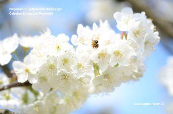 Nepozabno doživetje pri čebelarjih