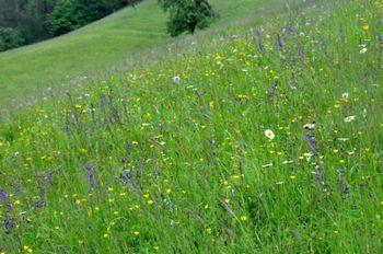 Stališča do vrstno pestrih travnikov