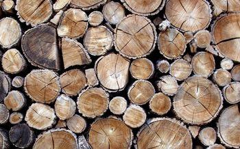 Les kot trajnostni vir energije