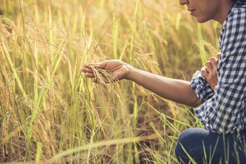 Kmetije odpirajo svoja vrata in vabijo k izkustvenem učenju kako do zdrave in lokalno pridelane hrane
