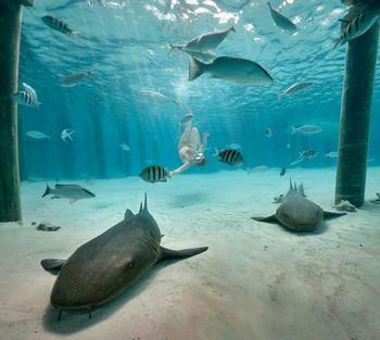S knjižnico po svetu: Bahami, karibski paradiž