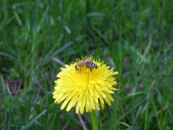 Nadomestilo škode v čebelarstvu
