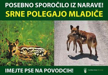 PREVIDNO V NARAVI: Prostoživeče živali polegajo mladiče, zato so še posebej občutljive!