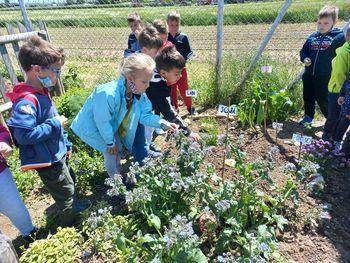 Mini projekt Rast rastlin