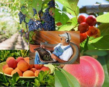 Izobraževanje za razvoj in krepitev dejavnosti na kmetiji