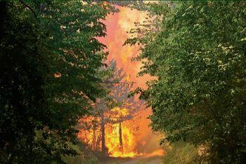 Pikniki lahko povzročijo požar v naravnem okolju