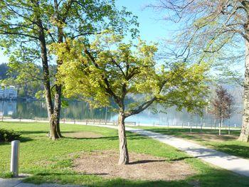 Pomlad na Bledu