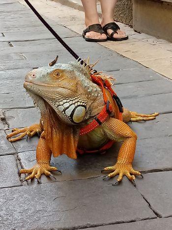 Razstava Amazing Animals – Čudovite živali na Bledu